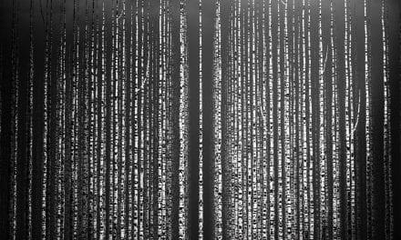[/] no. 34 | Makkatu – Ordeal